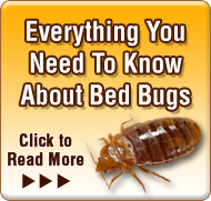 Pest Control Newsletter January 2018  sc 1 st  Termite Terry Pest Control & Orange Oil Facts - The Truth About Orange Oil - Costa Mesa ...