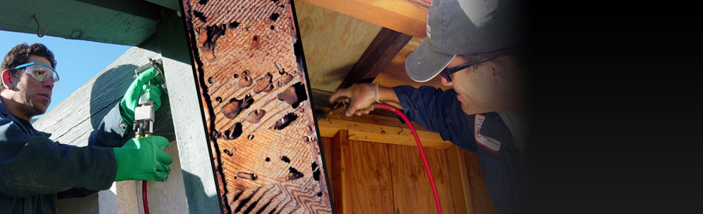 drywood-termite-treatment