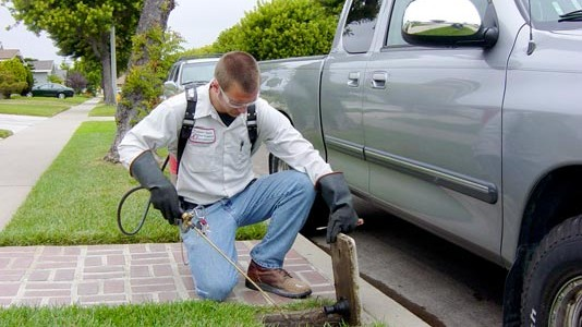 Pest Control Orange County 4