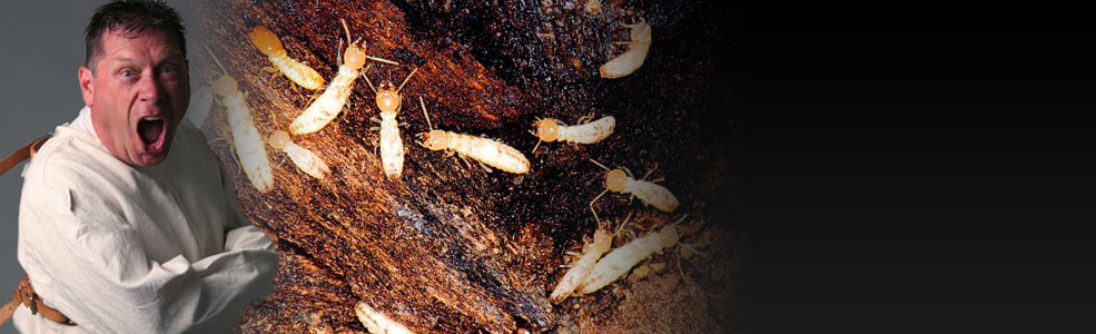 how to get rid of dry-wood termite agriculture