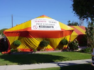 Termite Terry, your fumigation experts! Call 949-631-7348 today.