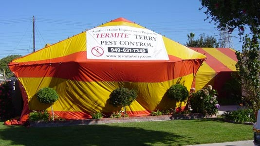 Termite Terry your fumigation experts! Call 949-631-7348 today. & Drywood Termite Fumigations - Costa Mesa Newport Beach ...