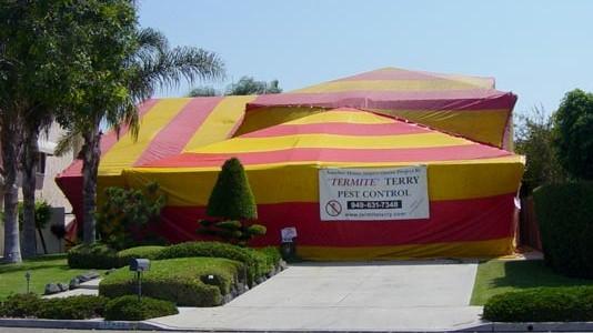 Termite Fumigation Orange County 13