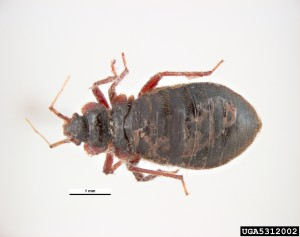 Bed-bugs-orange-county-termiteterry.com