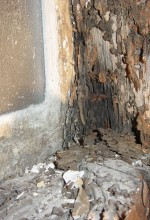 How To Keep Subterranean Termites Out Of Your Home