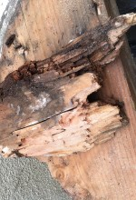 Dry Rot – The Silent Killer Of Wood