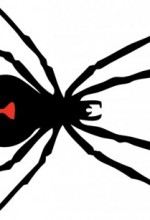 Using Spider Venom To Kill Chronic Pain