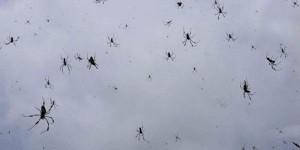 Spiders_elitedaily-600x300