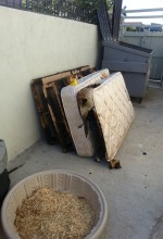 Man Is Upset With Bed Bugs And Sets Apartment On Fire