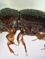 2,000 Trees At UCI Infested With Wood Boring Beetles
