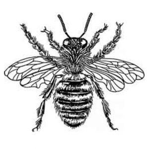 Bee Removal Newport Beach