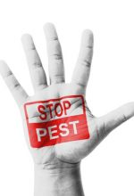 How To Have A Pest-Free Summer
