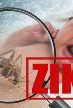 Zika Virus Attacks 157 Pregnant Women In The US