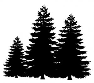 Fun Facts About Christmas Trees - Termite Inspection Orange County ...