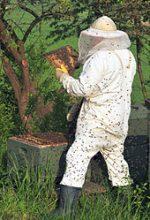 Russians Stung In Stolen Bee Case