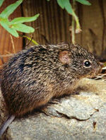 Man Contracts Hantavirus After Staying In Park Cabins
