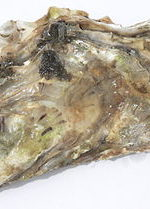 Woman Dies From Flesh-Eating Bacteria After Eating Raw Oysters