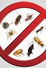 Ten Tips To Keep Your Home Pest-Free