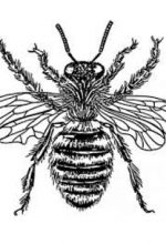 Bee Removal Newport Beach