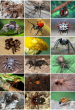 "Five ""Spooky"" Spider Myths Squashed"